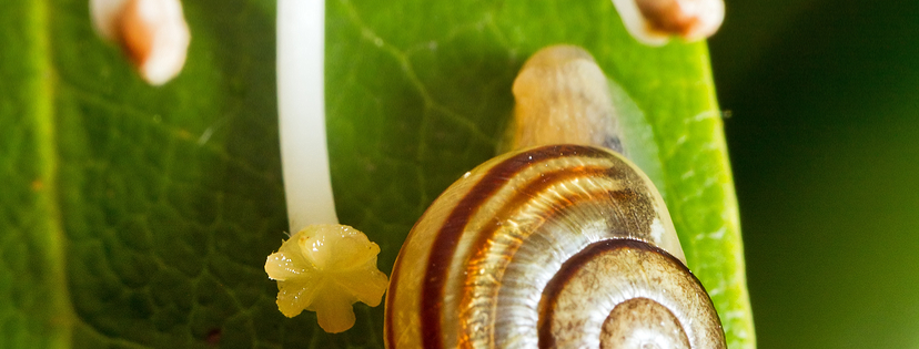 CULTIVATION / HOW TO GROW: Snails